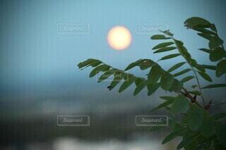 自然,風景,空,夕暮れ,青い空,幻想的,ぼかし,月,日暮れ,草木,淡い色,ライトブルー,薄明り,水色の空,山や町,枝先の葉