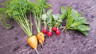 食べ物,野菜,ラディッシュ,食品,食材,ほうれん草,フレッシュ,ベジタブル,ガーデン,ニンジン
