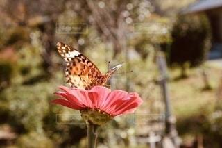 花のクローズアップの写真・画像素材[3508641]