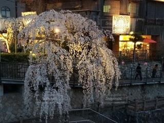 有馬の夜桜の写真・画像素材[3486655]