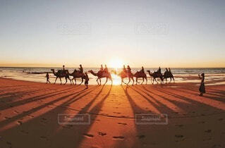 夕日に映るラクダの写真・画像素材[3623799]