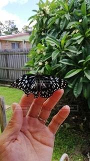 手と蝶々の写真・画像素材[3713099]
