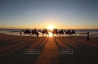 海辺をラクダで散歩の写真・画像素材[4104243]