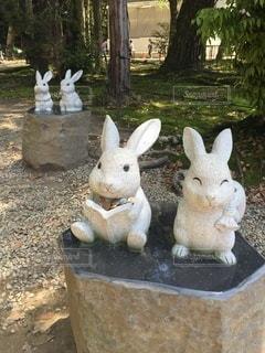 笑顔のウサギや読書するウサギたちの写真・画像素材[3481745]