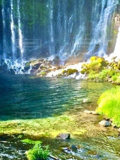 春、たっぷりの日差しを浴びる富士山麓の白糸の滝の写真・画像素材[3603360]