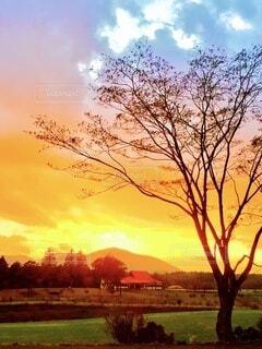 樹木のシルエット、山を背景に鮮やかに彩られた里山の夕暮れの写真・画像素材[3629646]