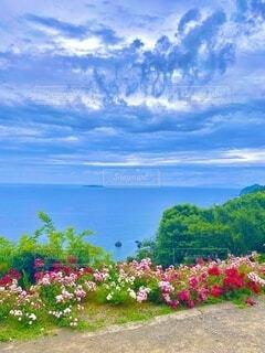 芸術的な空模様、ピンクの花々越しに見える青い海と水平線の写真・画像素材[4106187]