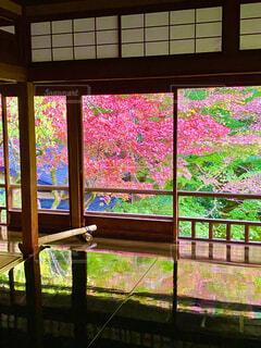 屋外の紅葉が室内の漆黒の卓上に鮮やかに反射した光景の写真・画像素材[4107449]