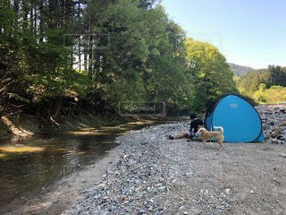 犬と川キャンプの写真・画像素材[3445706]