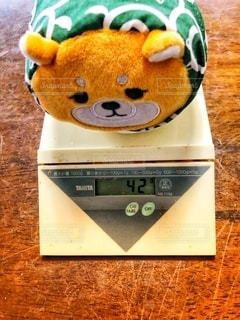 柴ずきん体重測定の写真・画像素材[3480080]