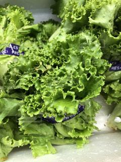 食べ物,野菜,食品,八百屋,葉野菜,食材,フレッシュ,日中,ベジタブル,葉物