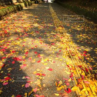 カラフルな秋の帰り道の写真・画像素材[858511]