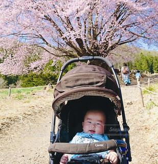 天王桜を背景にの写真・画像素材[4272095]