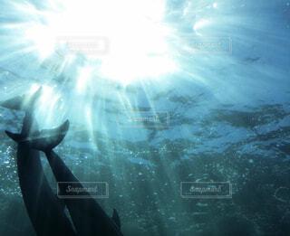 水族館のイルカの写真・画像素材[4416490]