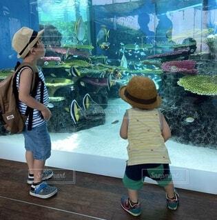 なかがわ水遊園の写真・画像素材[4653944]