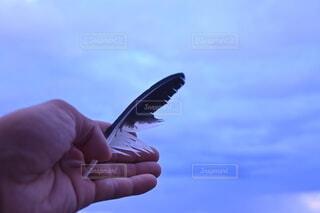 空,動物,屋外,手持ち,人物,人,羽,羽根,ポートレート,ライフスタイル,手元