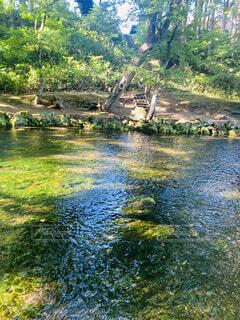 自然,屋外,川,水面,池,樹木,草木,ガーデン