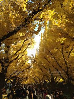 自然の写真・画像素材[147263]