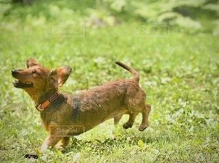 エンジョイ犬の写真・画像素材[3456059]