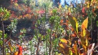 植物のクローズアップの写真・画像素材[3462526]