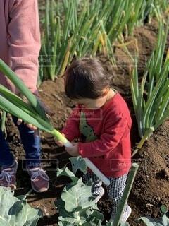 子ども,食べ物,冬,屋外,野菜,人,赤ちゃん,食品,幼児,畑,男の子,ネギ,大根,1歳,幼稚園,収穫,0歳,保育園,食材,採れたて,フレッシュ,ベジタブル,boy,かぶ,未就学児,採れたて野菜