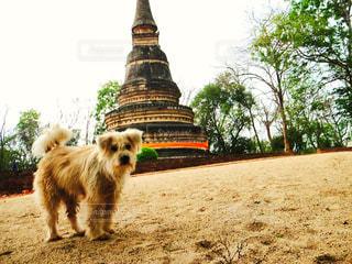 旅行先タイの寺院にて。の写真・画像素材[3463580]