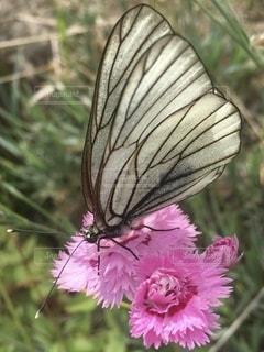 花のクローズアップの写真・画像素材[3459876]
