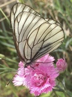 花のクローズアップの写真・画像素材[3459875]