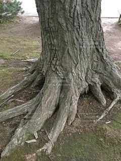 樹木のたくましさの写真・画像素材[3463638]