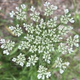 花のクローズアップの写真・画像素材[3466790]