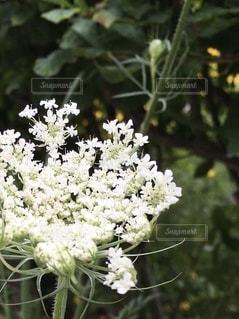 花のクローズアップの写真・画像素材[3467745]