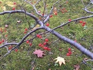 苔の絨毯の写真・画像素材[3812530]