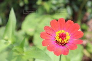 花のクローズアップの写真・画像素材[3571099]