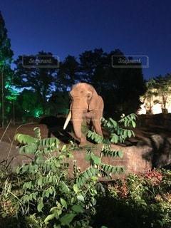 夜の動物園の写真・画像素材[3502438]