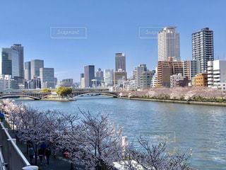 大都会中之島の桜まつりの写真・画像素材[2060594]