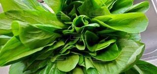 食べ物,緑,葉,野菜,食品,食材,フレッシュ,ベジタブル,小松菜