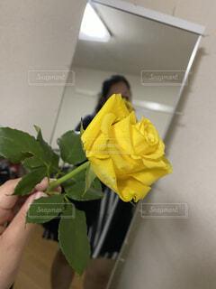 花,屋内,黄色,手持ち,人物,ポートレート,ライフスタイル,手元
