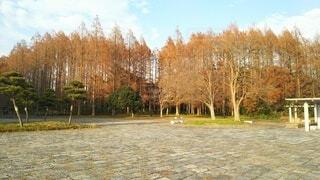 空,公園,秋,屋外,樹木