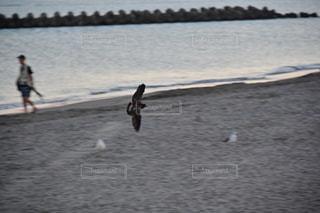 早朝の日本海の写真・画像素材[3563462]