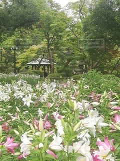 花園のクローズアップの写真・画像素材[3480881]