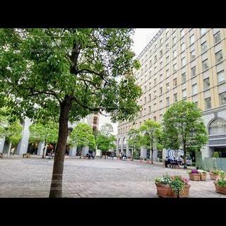 イタリア街の写真・画像素材[3525114]