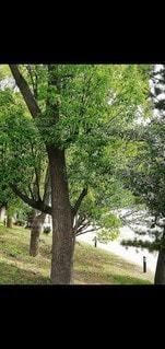 千鳥ヶ淵の写真・画像素材[3525121]