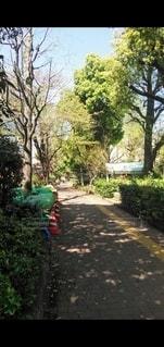 公園脇の歩道の写真・画像素材[3525136]