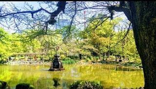 公園の池の写真・画像素材[3525125]