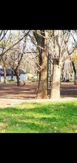 公園の木の写真・画像素材[3525141]