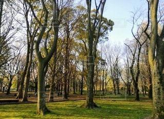 公園の大きな木の写真・画像素材[3525140]