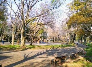 公園の木の写真・画像素材[3525143]