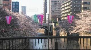 塀に架かる橋の写真・画像素材[3525144]