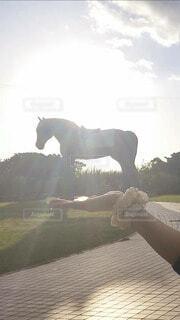 公園,動物,屋外,手,手持ち,人物,馬,手元,日中