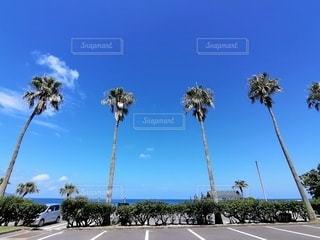 海,空,屋外,青い空,駐車場,ヤシの木,ライフスタイル,日中